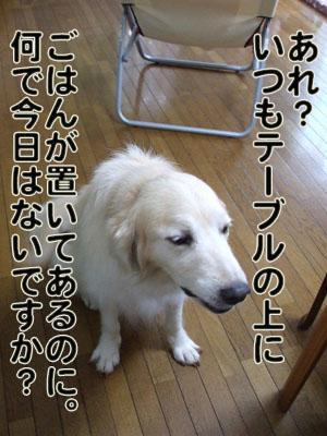 2010_07150023.jpg