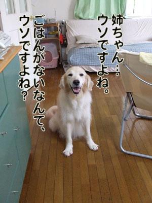 2010_07150029.jpg
