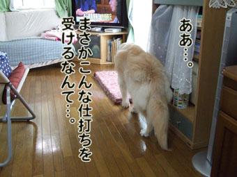 2010_07150037.jpg