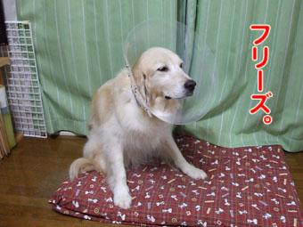 2010_07170010.jpg