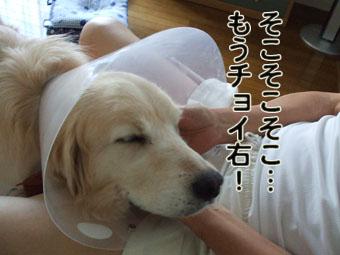 2010_07180010.jpg