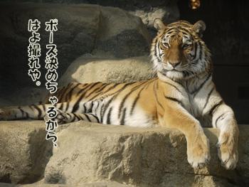 2012_04080091.jpg