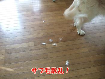 2012_04150001.jpg