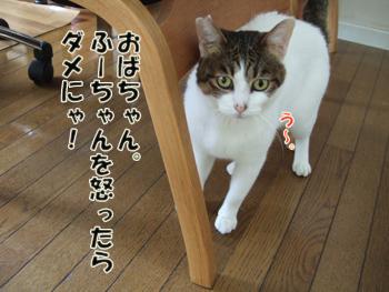 2012_04150007.jpg