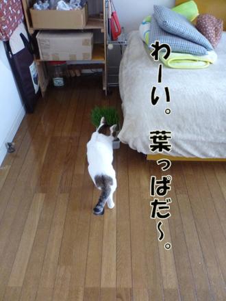 2012_04180019.jpg