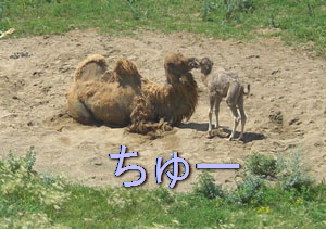 zoo0709104.jpg