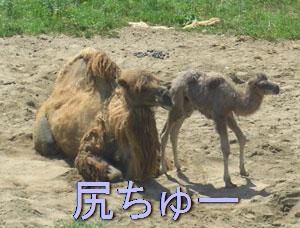 zoo0709105.jpg