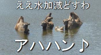 zoo0709106.jpg
