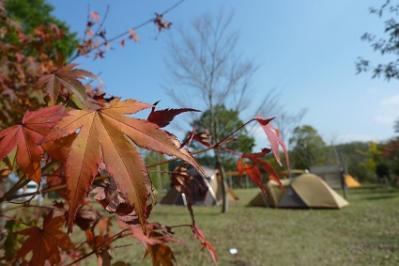 20111113歌瀬キャンプ (10)