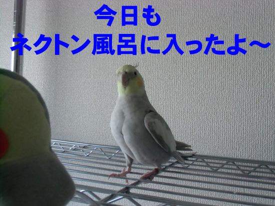 また(^_^;)