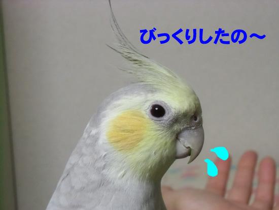 ごめんね、風~