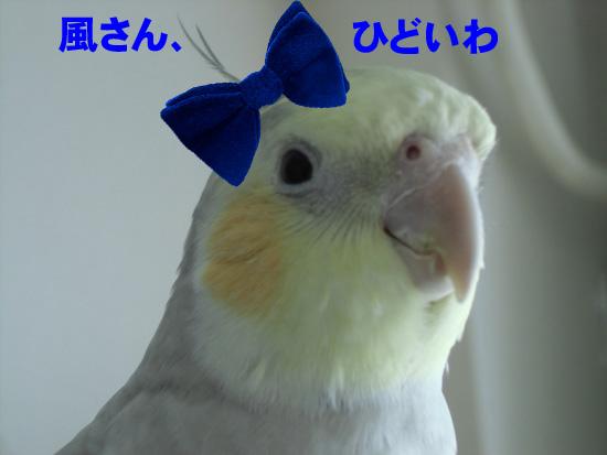 風子ちゃん再び