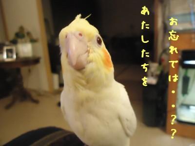 動画 312