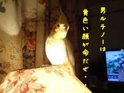 動画 397