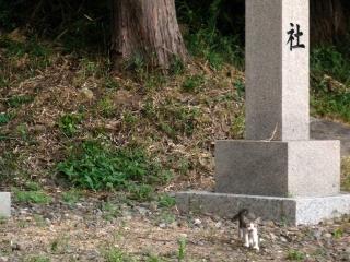 社宮司社のネコ