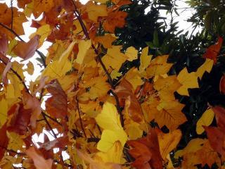 いろいろな木が、赤色や黄色に