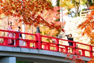 岡崎公園 紅葉 神橋