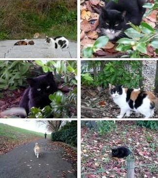 散歩で出会った猫さんたち