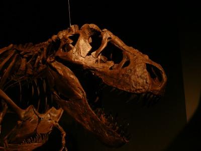 特別展「恐竜博2011」