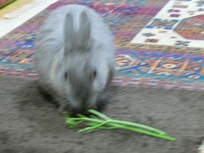 パセリの茎を食べる兵曹