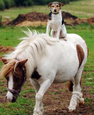 freddie-on-shetland-pony.jpg