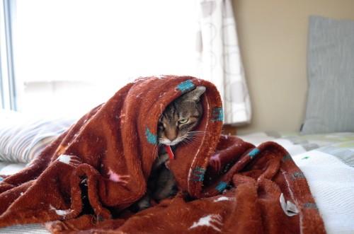 寒い日のお気に入り