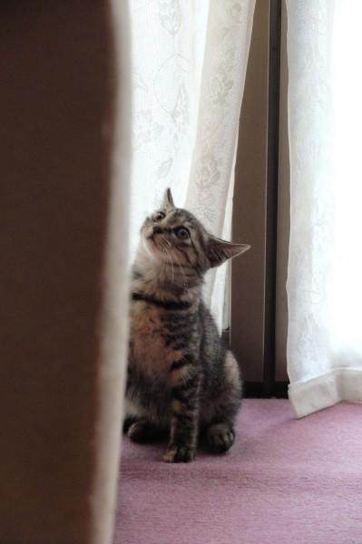 続・子猫ねこねこ1