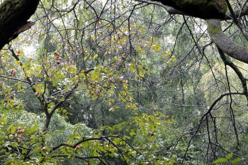 雨の日の竹林