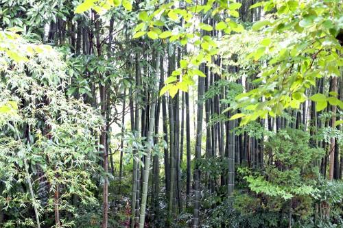 竹林の秋+OUTBOUNDその1