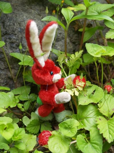 赤いウサギその5