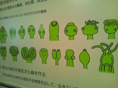 寄生虫館7