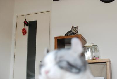 ネコの目は語る。