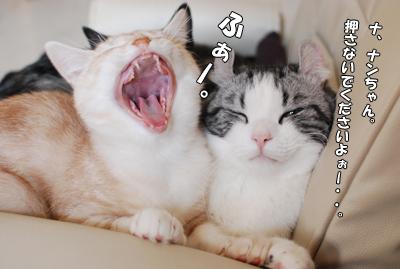 あったかくて眠くなっちゃう・・。