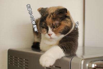猫だって怒るもん!