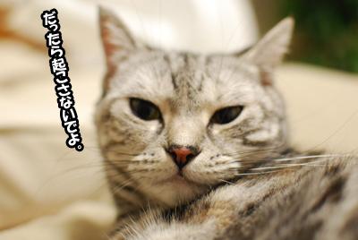 不機嫌ネコ。