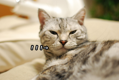 ぷっくりネコ。