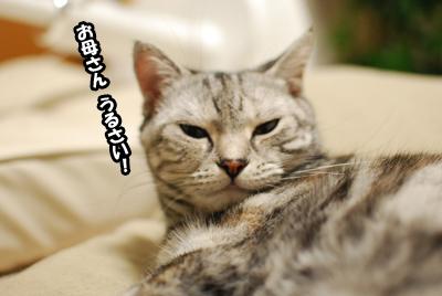 寝起きネコ。