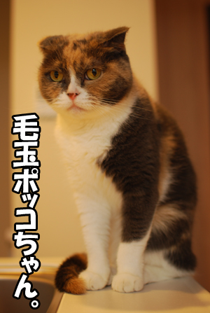 毛玉ポッコちゃんです☆