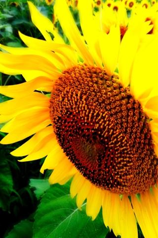 夏の風景3_1