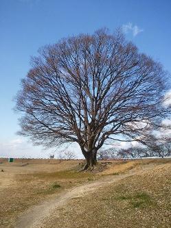walking-tree.jpg