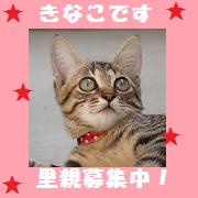 kinachan.jpg