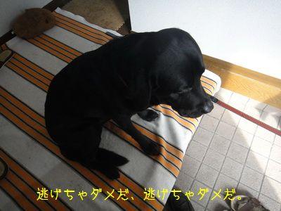 2011 02 06_2657