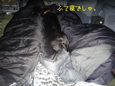 2011 02 19_3164N