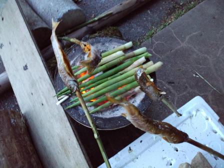 竹の子2010,06,04
