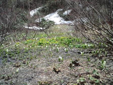祐延湖畔湿地2010-0605