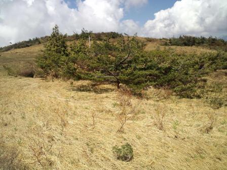 森林限界より東笠頂上2010-06-05