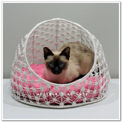 ペット用品 犬 猫 pet goods dog cat แมว ไทย