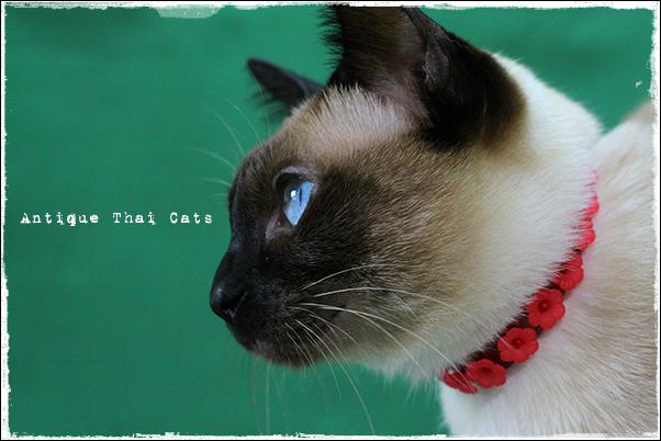 猫用品 cats goods ของแมว クリスマス Christmas 首輪