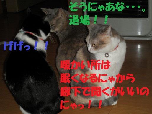20130251-13.jpg