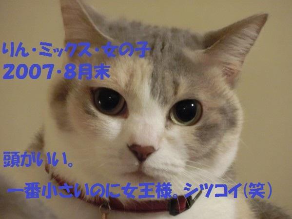 20130811-00001.jpg